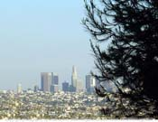 Downtown-LA-Pine-View