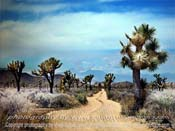Joshua-Tree-Park-Road