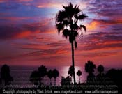 Palms-And-Skies-Pacific
