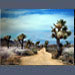 Joshua Tree Park Road