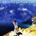 California Picture